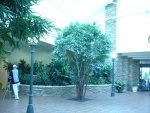 I love trees. This hospital was beautiful!